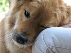 Pet Therapy sempre più diffusa in Italia: ecco il decreto
