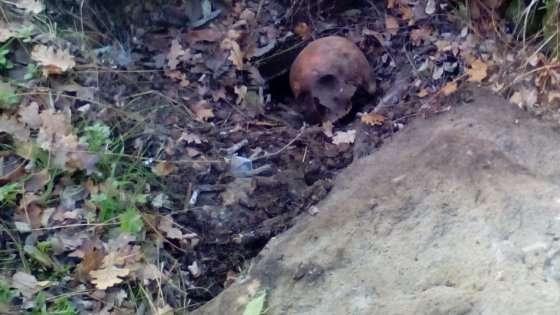 Bologna: in cerca di oro trova un teschio in un bosco vicino una chiesa sconsacrata