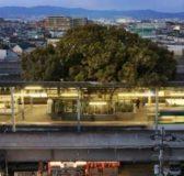 Giappone, costruiscono la stazione attorno ad un albero: svelato il motivo [video]
