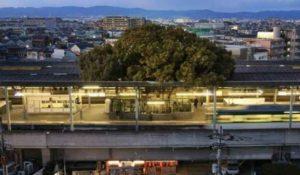 Giappone, costruiscono la stazione attorno ad un albero: svelato il motivo