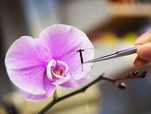 Dal Giappone arrivano i primi droni impollinatori 'sostituti' di api e farfalle