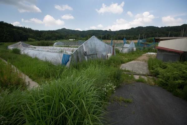 """Fukushima, Greenpeace: """"Contaminazione radioattiva ancora a livelli alti"""""""