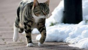 Bergamo, rinviato a giudizio il 'killer dei gattini': li torturava e seviziava fino alla morte