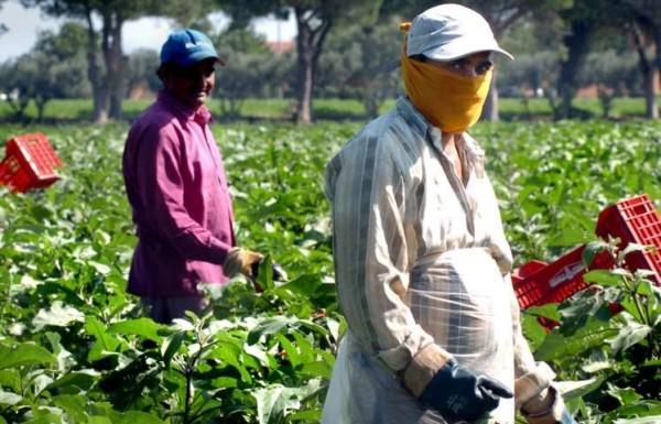 Caporalato: due nuovi emendamenti per fermare il lavoro nero nei campi