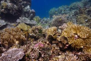 Adesso è ufficiale, le creme solari uccidono i coralli. Lo rivela uno studio americano