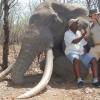 Paga 50mila euro per uccidere un rarissimo esemplare di elefante: solo le zanne pesavano 54 chili