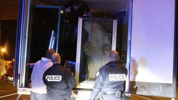 Migranti si intrufolano su un tir a Calais, ma a bordo trovano un orso polare