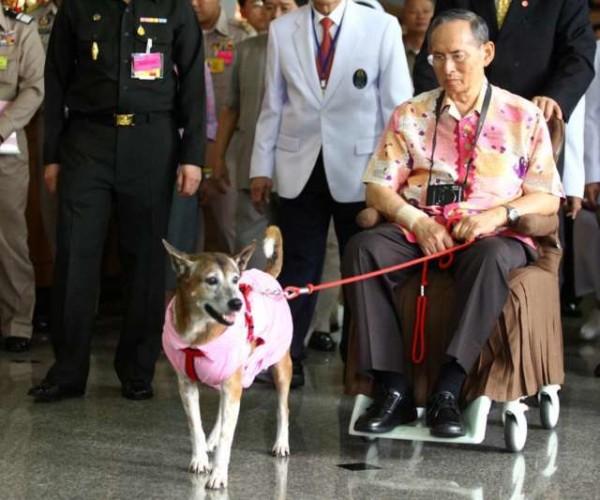 Thailandia, deride su Facebook il cane del re: rischia 37 anni di carcere per lesa maestà