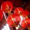 Firenze, cani macellati e serviti ai clienti in un ristorante cinese. Il web s'indigna, ma è una bufala