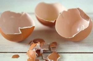 Eco-plastica: materiale biodegradabile che si piega e non si rompe grazie a guscio uova