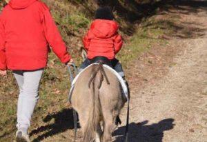 Siracusa: asino imbizzarrito trascina bimbo di 8 anni che perde la vita tragicamente