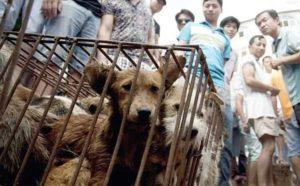 Cina, festival della carne di cane: campagna per dire 'no' al massacro di Yulin
