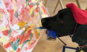 Dagger, il labrador che dipinge: quadri venduti anche a 200 dollari per beneficenza