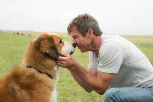 'Qua la zampa', accusati di maltrattamento del cane Hercules