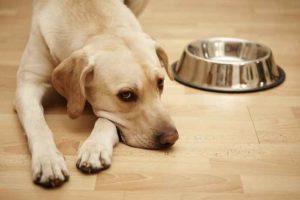 Sedativo nel cibo per animali, muore un cane: la Evanger's ritira i prodotti