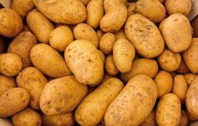 Allarme Fipronil, trovato anche nelle patate. In Francia trovate tracce anche nella pasta
