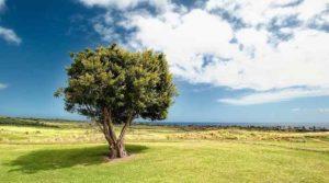 Il portale più aggiornato sulle grandi tematiche ambientali: ecologia, rinnovabili, animali, piante e molto altro